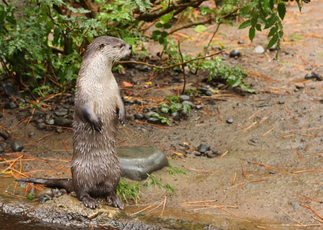 you-otter-be-the-better-person
