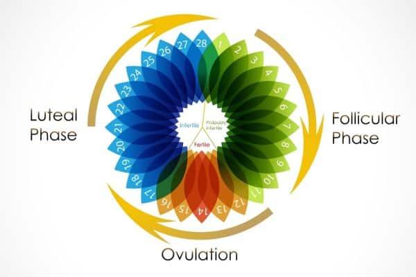 kalendar ovulacije