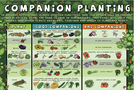 Savvy Housekeeping » Companion Planting