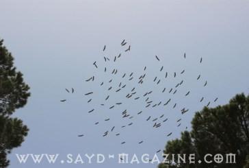 """الجهل الساطع لـ"""" قوّاص"""" من منطقة المتن يقتل طيورا مهاجرة"""
