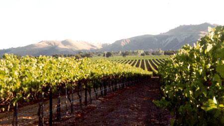 santa ynez wine tours