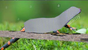 Salamander box model