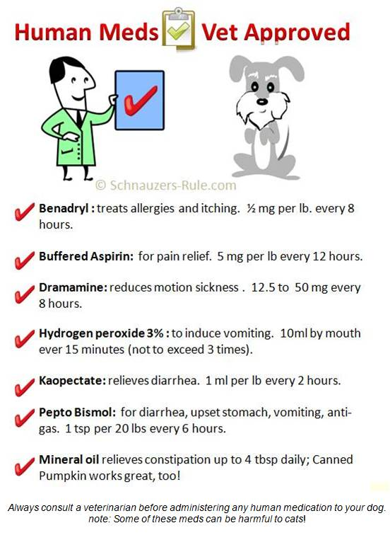Create a Dog First Aid Kit - sticker chart