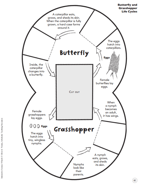 pollination insect diagram