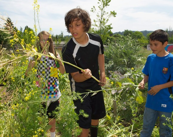 School Garden Project Expands Programming