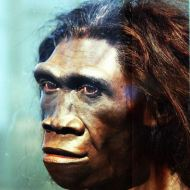 Reconstructed head of a Homo erectus female at the Smihtsonian Museum. By reconstruction by John Gurche; photographed by Tim Evanson [CC-BY-SA-2.0 (http://creativecommons.org/licenses/by-sa/2.0)], via Wikimedia Commons