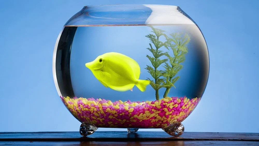 Why Can\u0027t Freshwater Fish Survive In Saltwater And Vice Versa