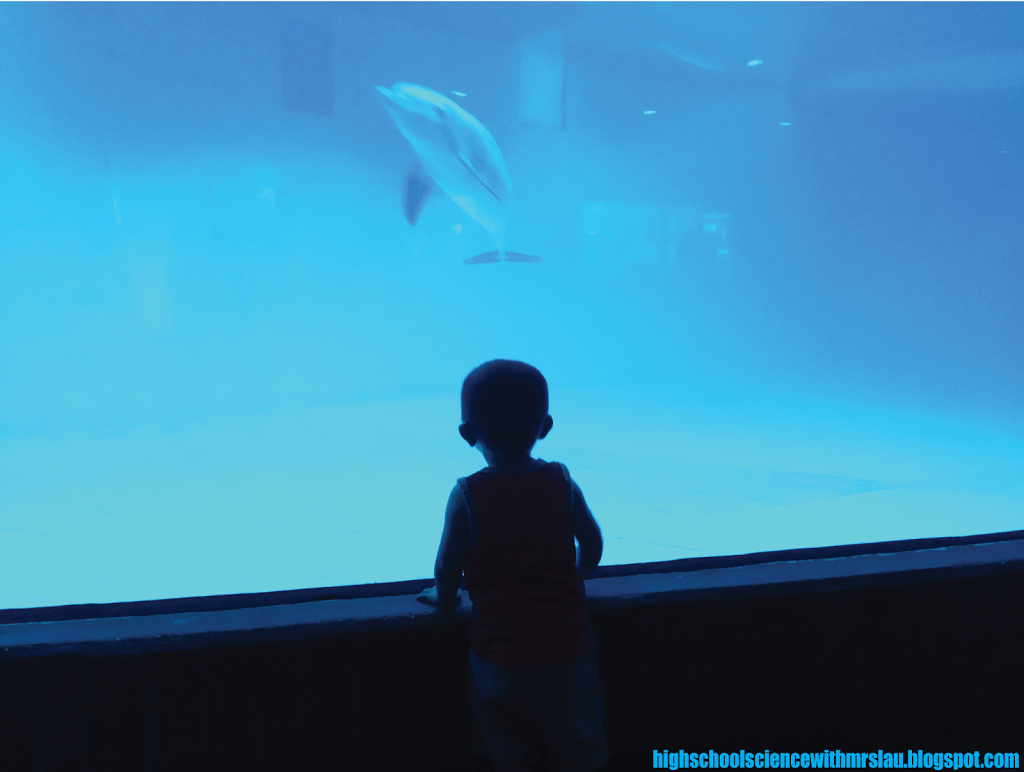 Confessions of an Aquarium Addict - Science and Math with Mrs. Lau