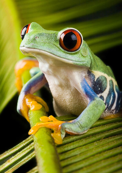 Amphibians - body, used, water, process, Earth, life - frog body