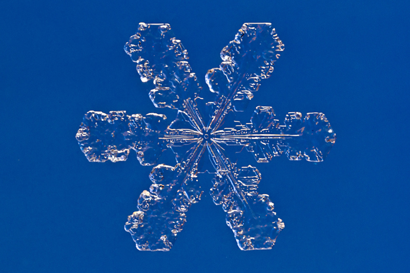 Real Snowflakes Falling Wallpaper How To Collect Preserve And Make Snowflakes Science Friday