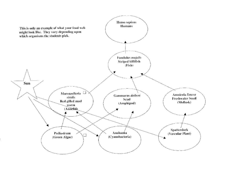 biomagnetism term paper