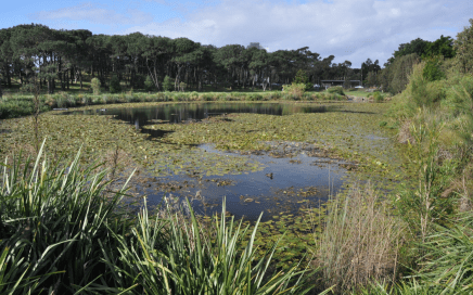 Does this wetland in Centennial Park, Sydney, have high biodiversity? Does it produce many mosquitoes? (Image: Jayne Hanford)