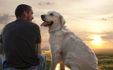 Man's best friend (Image: amazonaws.com)