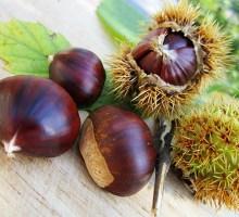 Frutta e verdura di stagione: novembre