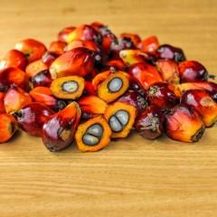Un post senza olio di palma