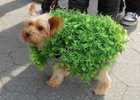 Fun Pet Halloween Costumes