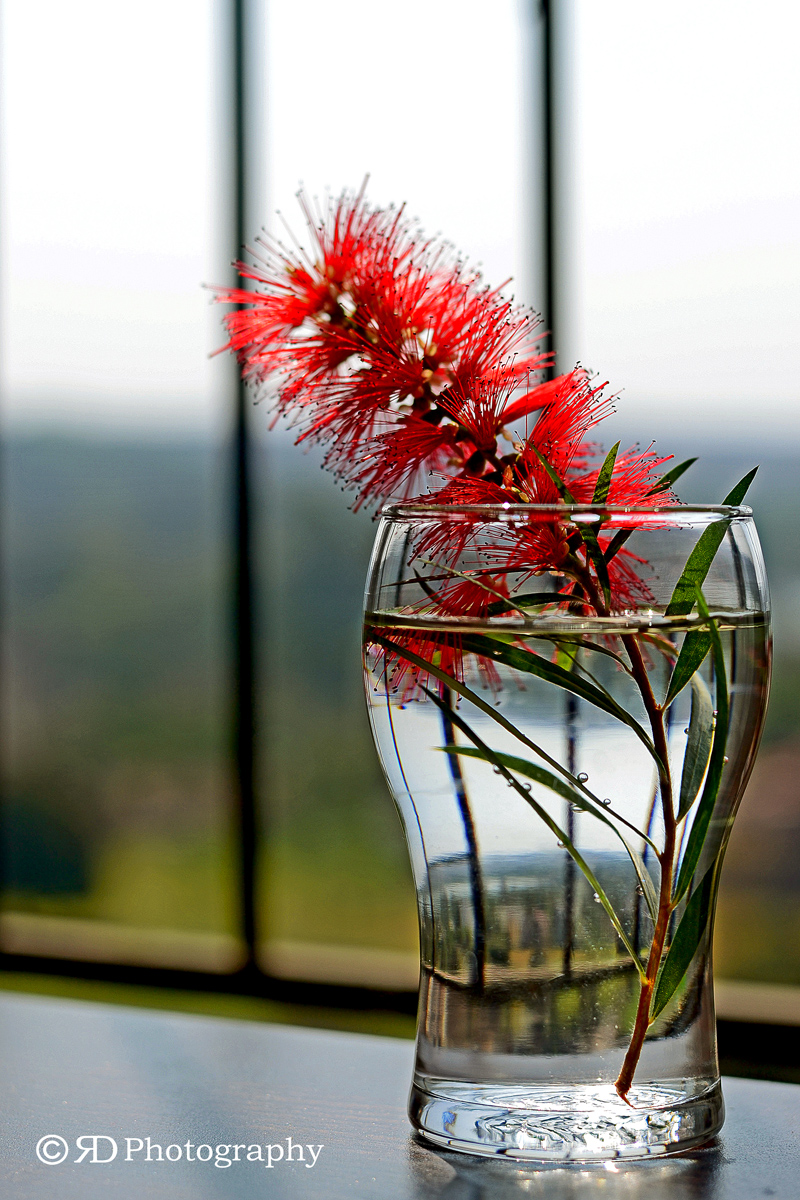 Wild flower in a glass