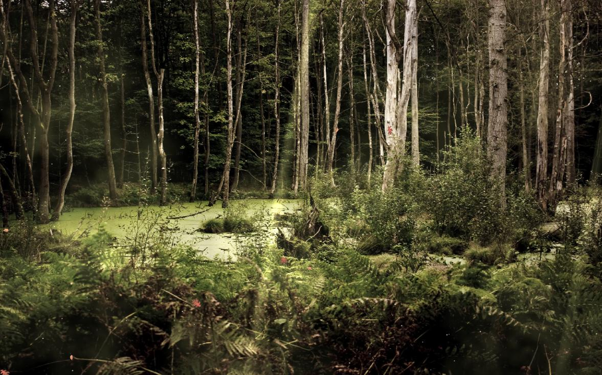 3d Animated Wallpapers And Screensavers Full Version Free Download Download The Mysterious Forest Screensaver
