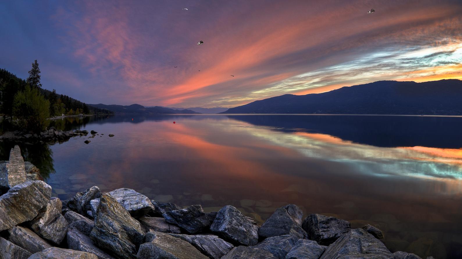 Beautiful Bird Lake Screensaver