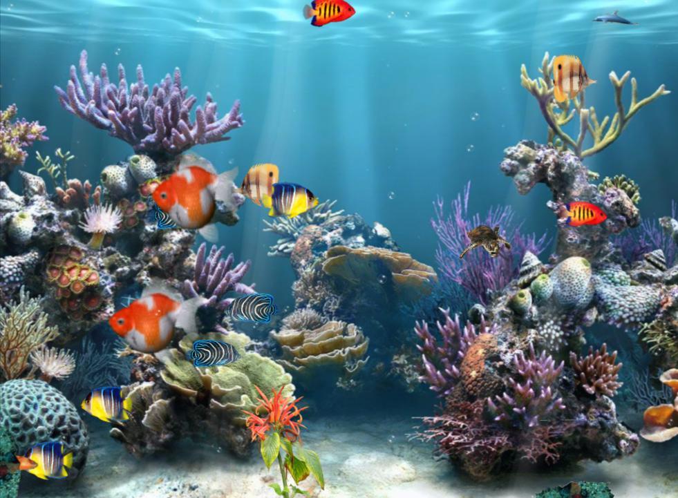 Animated Wallpapers Free Download For Xp Coral Reef Adventure Aquarium 3d Screensaver