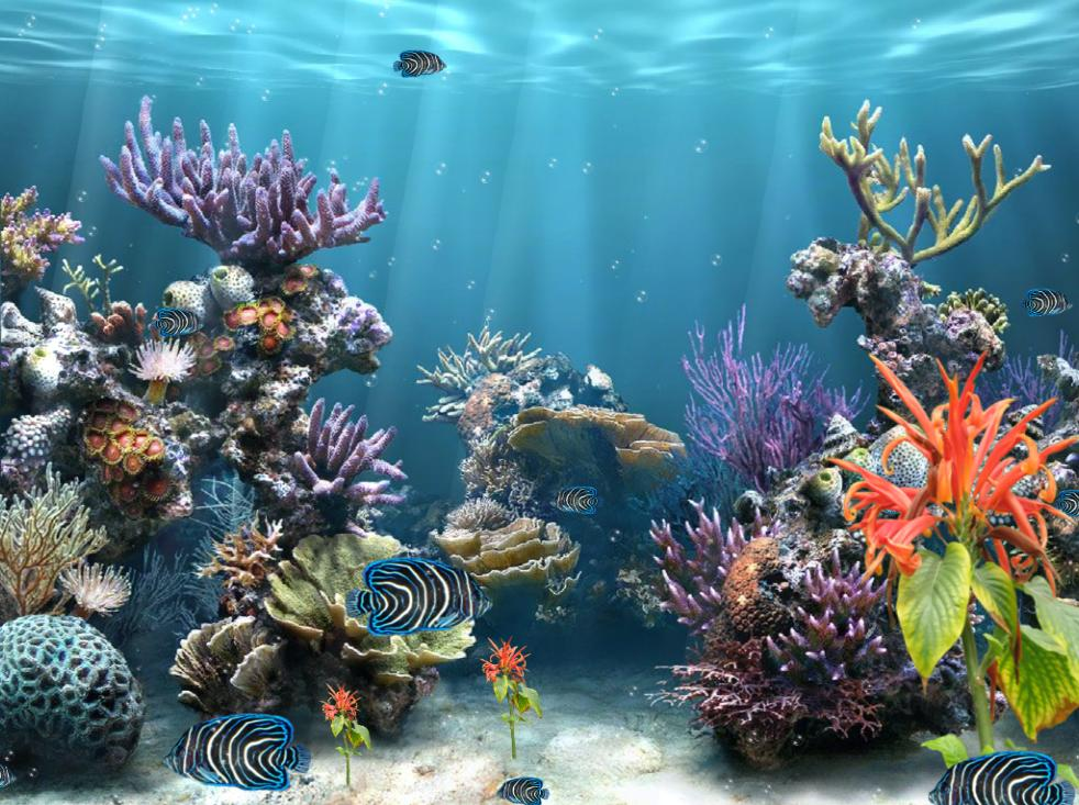 3d Animated Wallpapers And Screensavers Full Version Free Download Coral Reef Aquarium Screensaver