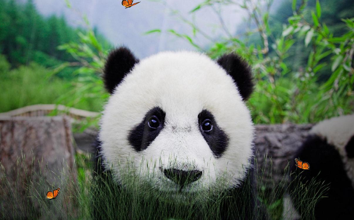 Cute Panda Screensaver