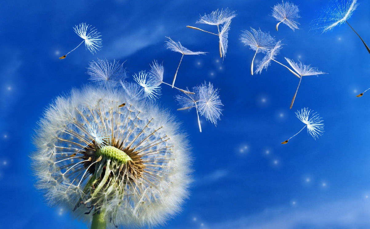 3d Wallpaper Windows 7 Animated Dandelion Screensaver Screensavergift Com