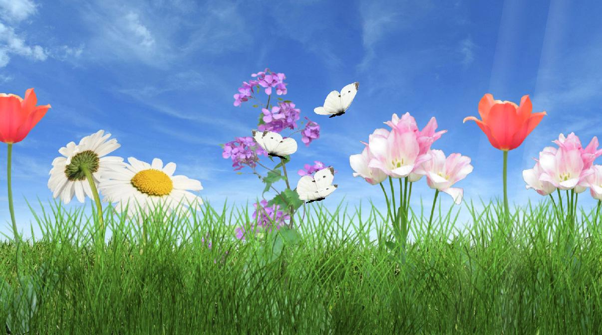 Morning Flower Screensaver