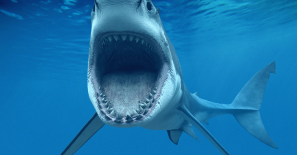 3d Moving Wallpaper For Windows 8 Shark Attack Screensaver Screensavergift Com