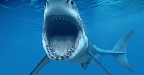 3d Animated Horror Wallpaper Shark Attack Screensaver Screensavergift Com