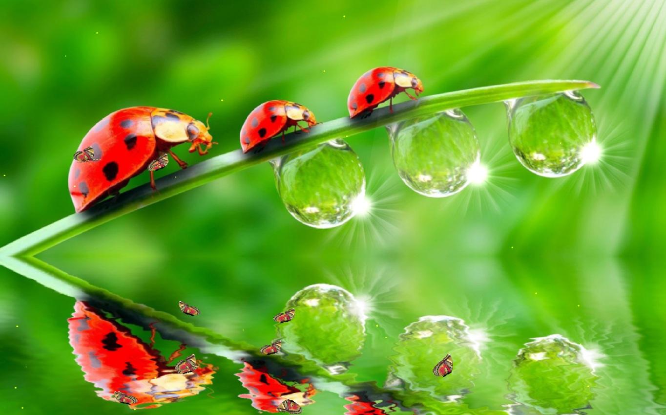The Ladybug Screensaver