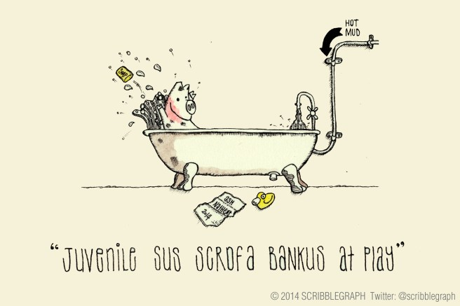 Sus scrofa bankus feeling very happy.