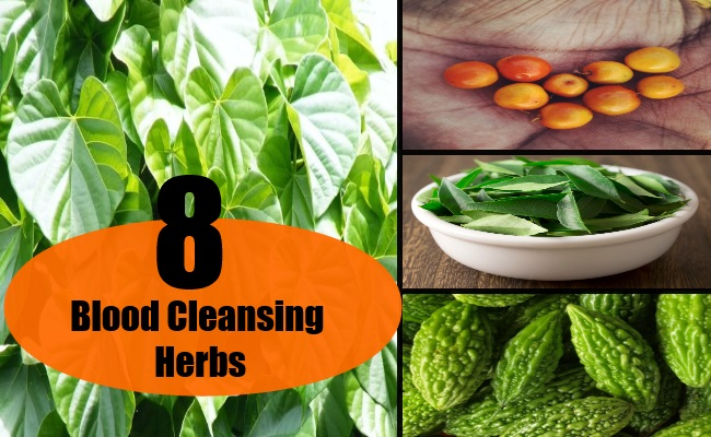 8 Blood Cleansing Herbs