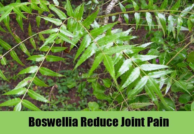 Boswellia Reduce Joint Pain