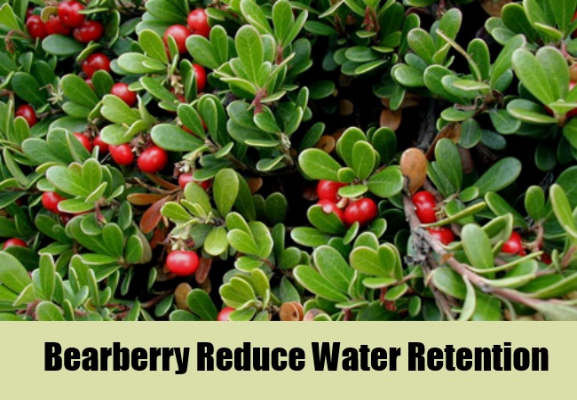 Bearberry Reduce Water Retention