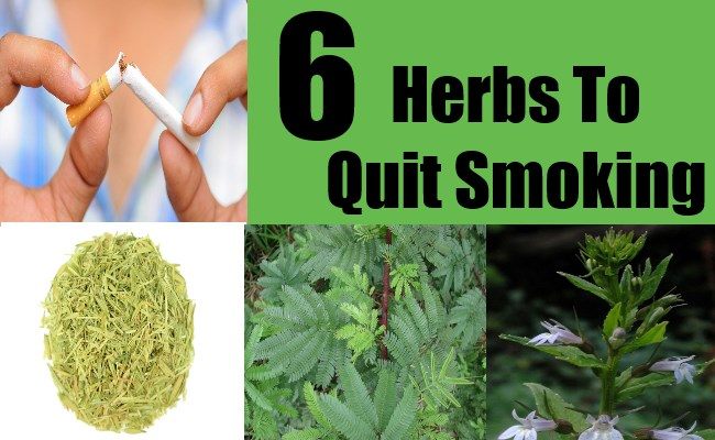 6 Herbs To Quit Smoking