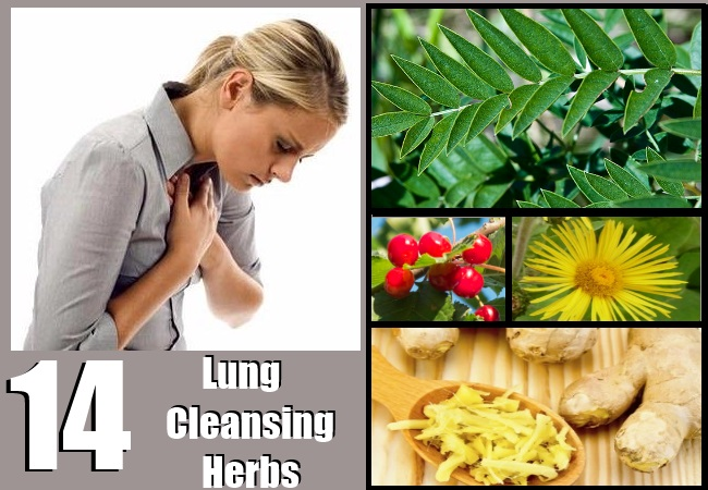 Lung Cleansing Herbs
