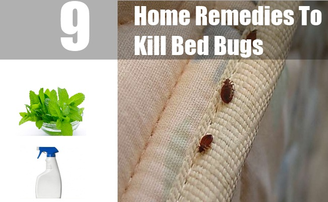 What Can I Use To Kill Bed Bugs At Home
