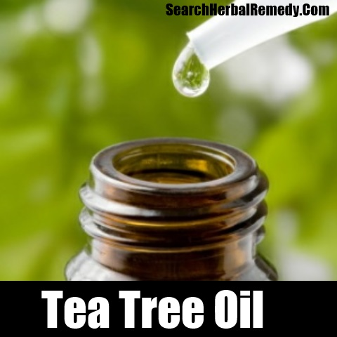 Natural Remedy Scabies Tea Tree Oil