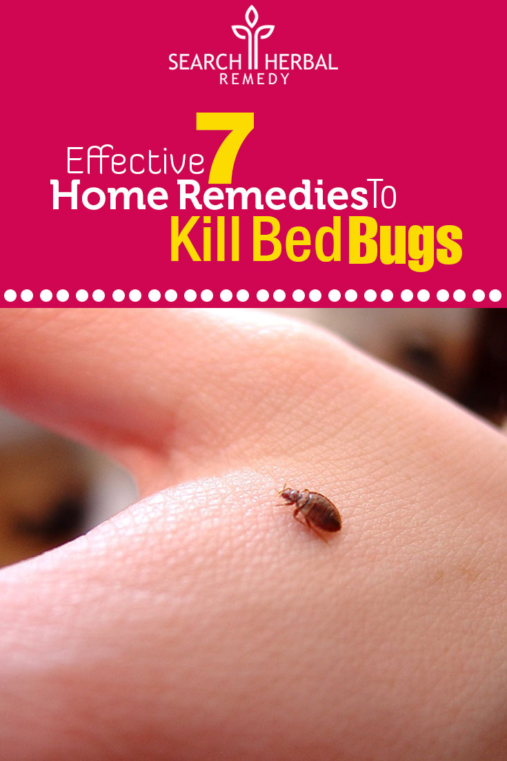 Homemade Remedies For Bed Bugs