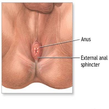 Anal fissures treatment