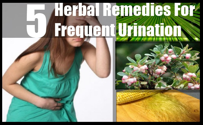 herbs for frequent urination