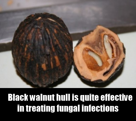 black walnut hull