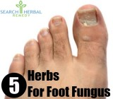 5 Herbs For Treating Foot Fungus