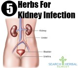 5 Herbs For Kidney Infection
