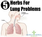 5 Herbs For Lung Problems