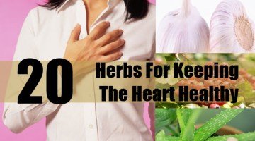 Herbs For Keeping The Heart Healthy