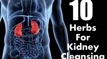 Herbs For Kidney Cleansing