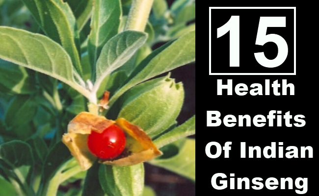 Health Benefits Of Indian Ginseng