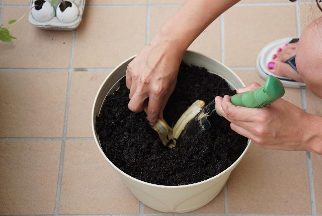 As A Fertilizer